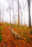 Nice autumnal scene with yellow leaves and fog - 213539881