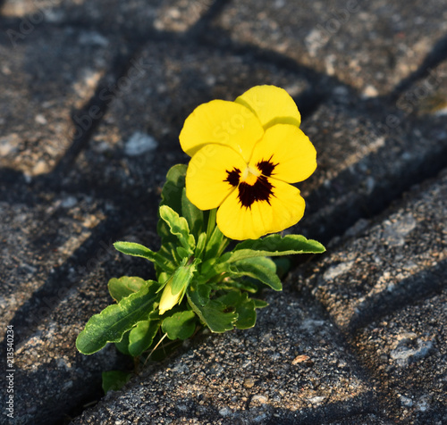 Choose to flourish