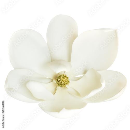 Magnolia Flower Isolated on White