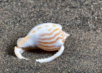 Seashell on beach with sunlight glare