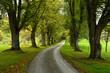 Leinwanddruck Bild - Lindenallee im Herbst
