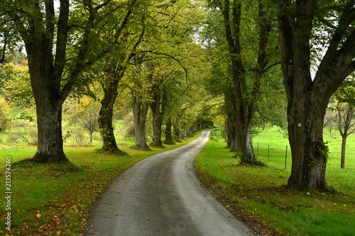 Leinwanddruck Bild Lindenallee im Herbst