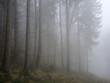 Leinwanddruck Bild - Nebelwald