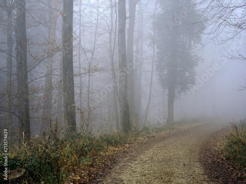 Leinwanddruck Bild Nebelwald