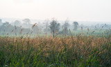 Wild grass in the morning sunrise - 213579659