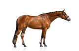 Purebred horse standing isolated - 213604800