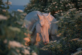 Portrait of a pearl pink horse among flowering trees on the sunrise in the morning - 213606603