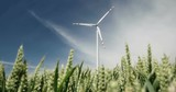 A modern wind turbine on a big farm field with young wheat - 213607610