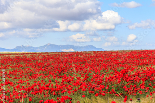 Foto Spatwand Klaprozen Poppy field and clouds, Granada Province, Spain