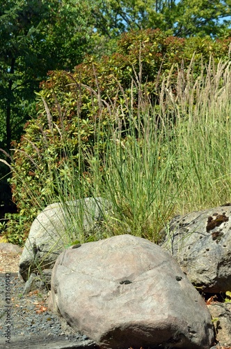 big gray stones in the foreground and long red green grass in the background