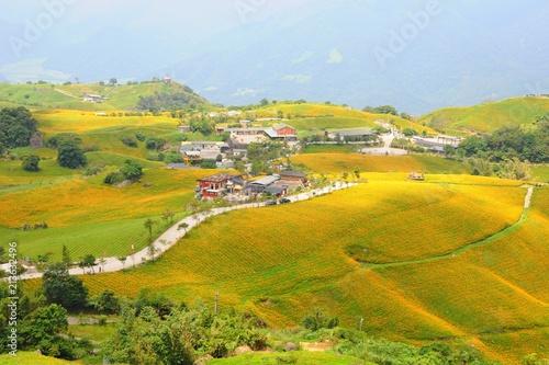 Foto Spatwand Honing Daylily Flowers Blooming in summer in Liushidan Mountain (Sixty Stone Mountain) in Hualien, Taiwan
