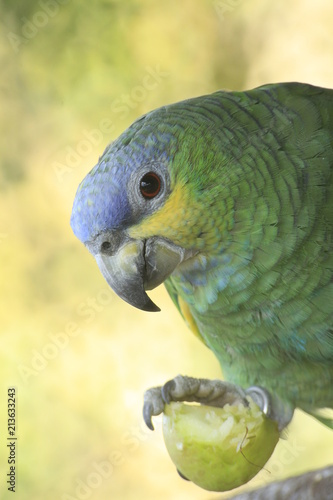 Fototapeta Pássaros nativos