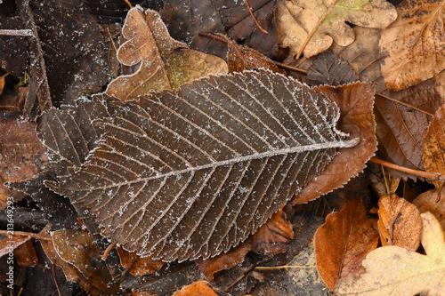 Leinwanddruck Bild Raureif; hoar; rime; Covered with frost;