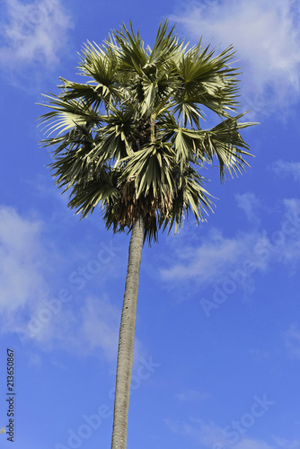 Palme, blauer Himmel, Chaung Thar Beach, Golf von Bengalen, Ayeyarwady, Myanmar, Asien