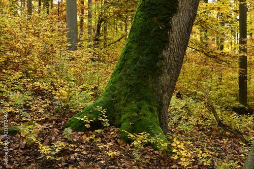 Leinwanddruck Bild Herbstwald