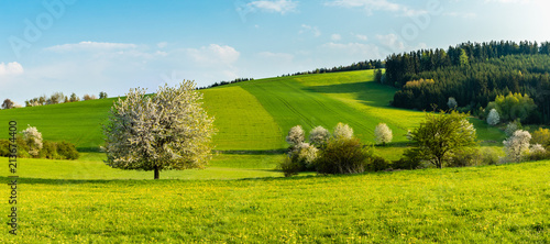 Beautiful spring landscape. Fresh green hills and fields with blossoming trees. Blue skies, clouds. - 213674400