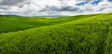 Rolling hills, endless green fields. Amazing agriculture scene. Fresh spring green colors, crop, wheat. Cloudy sky, creating dramatic look. - 213674606