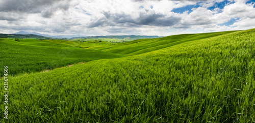 Fototapeta Rolling hills, endless green fields. Amazing agriculture scene. Fresh spring green colors, crop, wheat. Cloudy sky, creating dramatic look.
