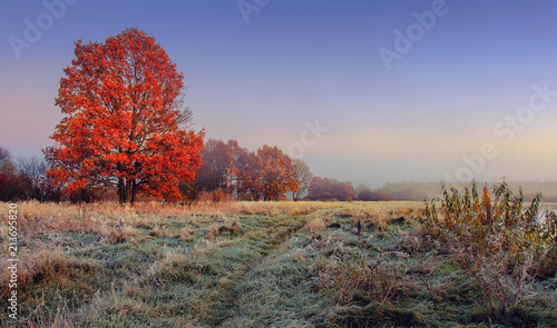 Autumn nature landscape. Colorful red foliage on branches of tree at meadow with hoarfrost on grass in the morning. Panoramic view on scenic nature at fall. Perfect morning at outdoor in november