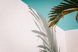 Palm tree leaves against turquoise sky and white wall. Pastel colors, creative colorful minimalism. Copy space for text - 213704696