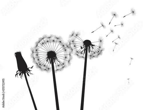 Black silhouette Dandelions. Vector Illustration..Black silhouette Dandelions on white background. Vector Illustration. - 213722415