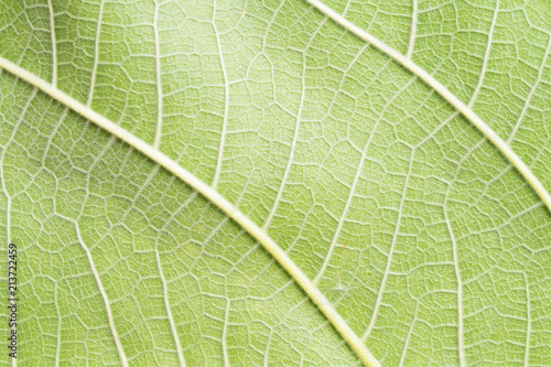 close up view of green leaf - 213722459
