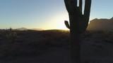 4K Desert Sunrise with Sun Peaking Through Saguaro Cactus Zoom In - 213730686
