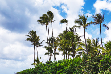 Palm trees on tropical beach in Haleiwa, North shore of Oahu, Hawaii