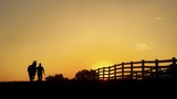 Silhouette of a man walking horse along fence in morning against a golden sky. - 213744634