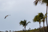Flying bird and palm trees - 213745022