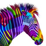 colorful zebra isolated on white background