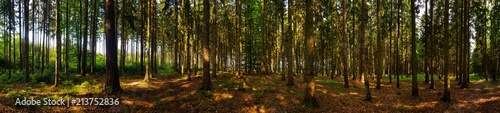 view in the forest panorama with trees - 213752836