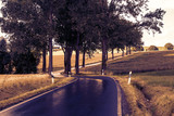 Wet country road with trees - 213761694