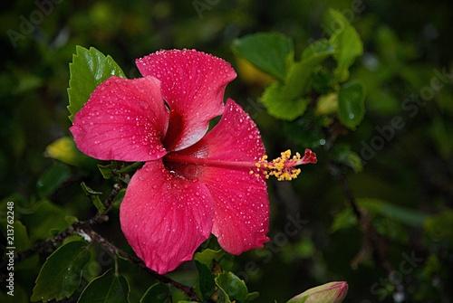 Foto Spatwand Zanzibar Fleur Nature Red Pink Plant Zanzibar