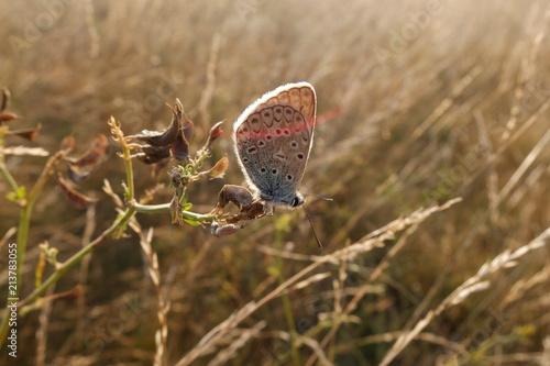 Бабочка в поле