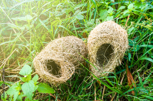 Birds nest in the forest and grass.