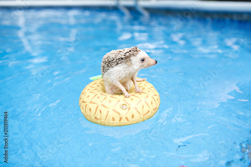 hedgehog on floting life buoy
