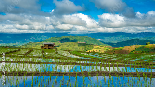 Foto Murales Rice Field Mountain View With Sky Water Reflection