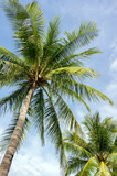 The most beautiful picture of palm tree, sea with blue sky background - 213826655