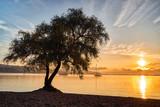 Murtensee (Lac de Morat)  - 213837284