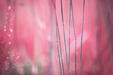 Abstract blurry pink red colored meadow. Selective focus used. - 213847238