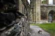 Dog lying at church ruine