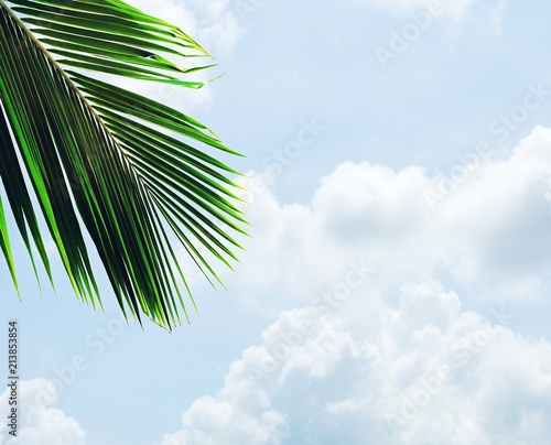 palms leaf on blue sky with cloud in summer - background