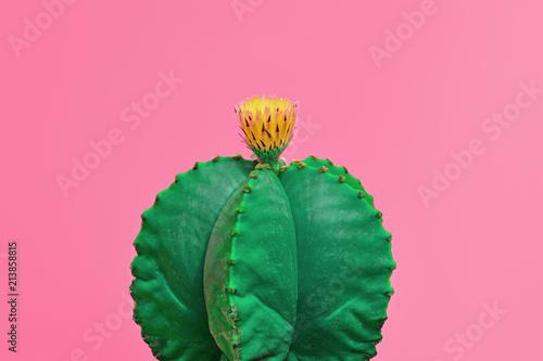 Cactus. Minimal Fashion. Creative Design. Art - 213858815