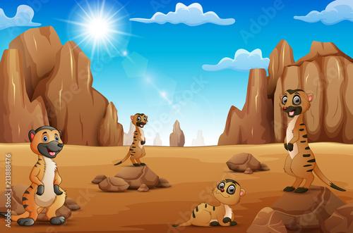 Fotobehang Zoo Cartoon Meerkats standing in the desert