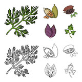 Dill, cocoa beans, basil.Herbs and spices set collection icons in cartoon,outline style vector symbol stock illustration web. - 213908063