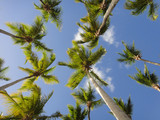 Coconut Palm tree with blue sky,retro and vintage tone - 213913826