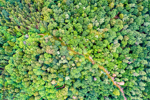 Fotobehang Lime groen Aerial view of trees and a road in the Vosges Mountains, France