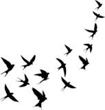 Schwalben Vogelschwarm - 213923008