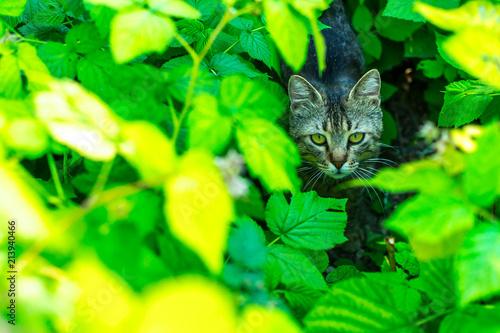 Cat in the garden - 213940466